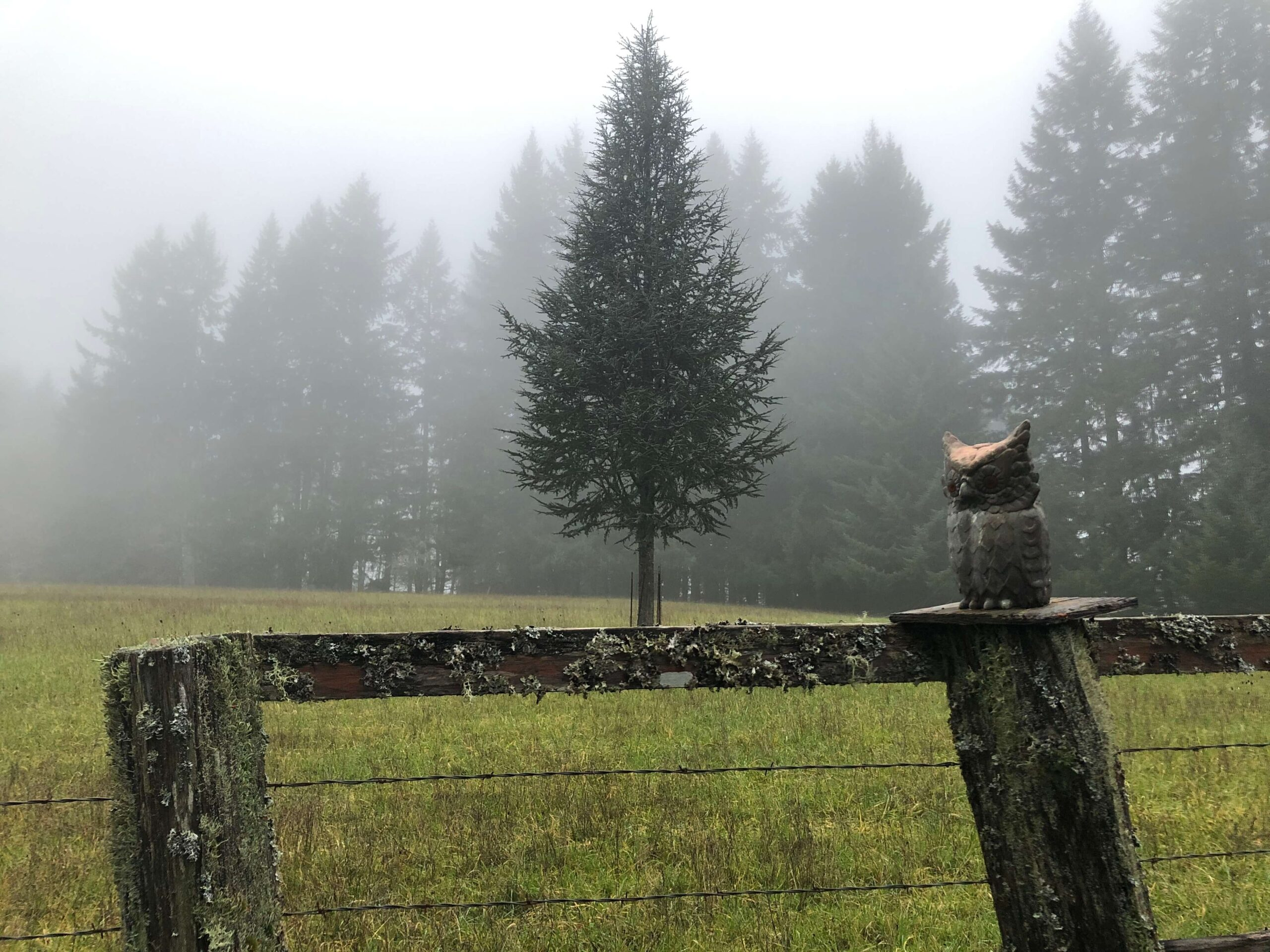 Photograph of fence and field illustrating forced perspective where tree appears to be sprouting from fence..